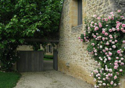 Roses at entry